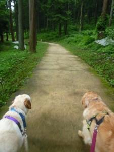 神奈川県相模原市犬の預かりWAPPLE大型犬ペットホテルケージレス