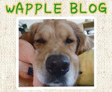 blogb01