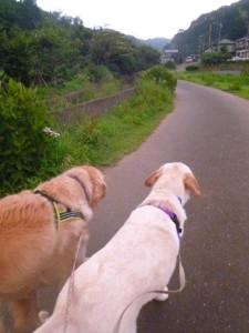 里山へお散歩に向かいます