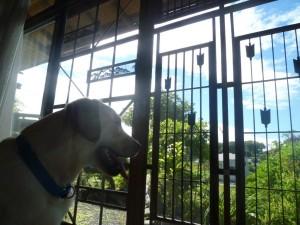 神奈川県相模原市犬の預かりWAPPLE大型犬ペットホテルケージフリー