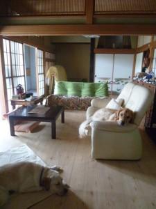 神奈川県相模原市犬の預かりWAPPLE大型犬ペットホテルドッグホテルケージレスフリー