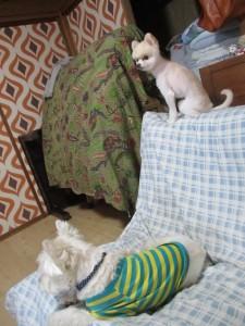 神奈川県相模原市犬の預かりWAPPLEワップルペットホテルドッグホテルお散歩日帰り町田八王子多摩ケージレスケージフリー圏央道高尾山口大型犬